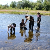 Aquatic insect sampling on the Clark Fork River